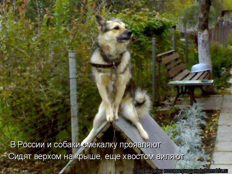 Котоматрица: В России и собаки смекалку проявляют Сидят верхом на крыше, еще хвостом виляют