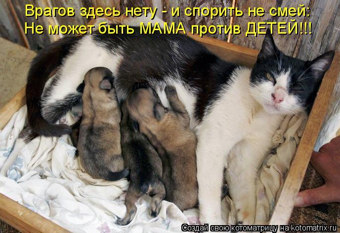 http://kotomatrix.ru/images/lolz/2015/11/12/Cj.jpg