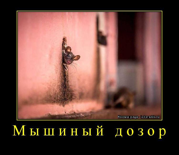 Котоматрица: Мышиный дозор