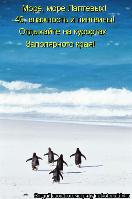 Котоматрица: Море, море Лаптевых!  -40, влажность и пингвины! Отдыхайте на курортах  Заполярного края!