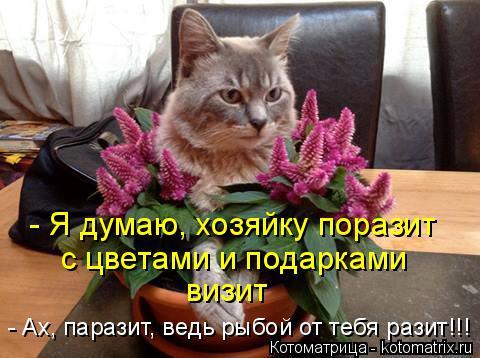 Котоматрица: - Я думаю, хозяйку поразит с цветами и подарками визит - Ах, паразит, ведь рыбой от тебя разит!!!