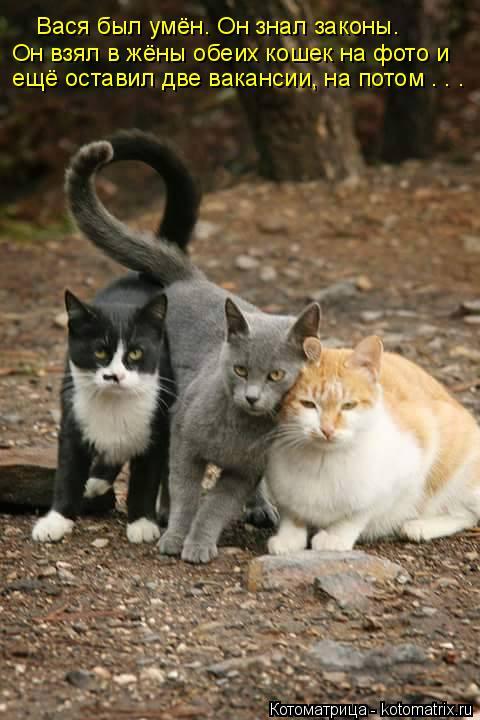 Котоматрица: Вася был умён. Он знал законы. Он взял в жёны обеих кошек на фото и ещё оставил две вакансии, на потом . . .