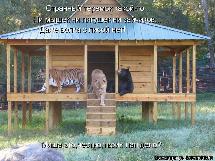 Котоматрица: Странный теремок какой-то... Ни мышек,ни лягушек,ни зайчиков... Даже волка с лисой нет! Миша,это,честно,твоих лап дело?