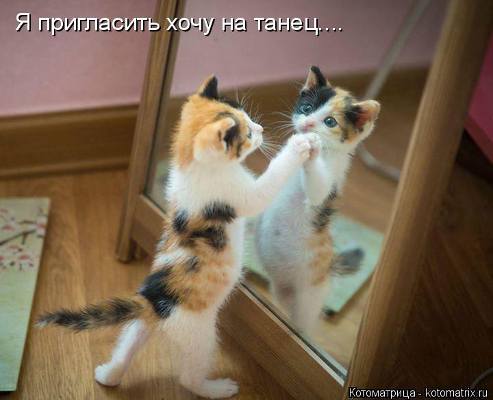 Котоматрица: Я пригласить хочу на танец....