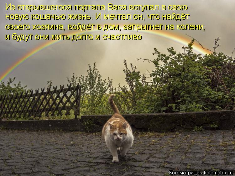 Котоматрица: Из открывшегося портала Вася вступал в свою новую кошачью жизнь. И мечтал он, что найдёт  своего хозяина, войдёт в дом, запрыгнет на колени, и