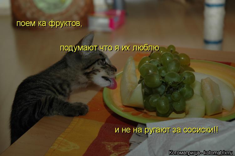 Котоматрица: поем ка фруктов, подумают что я их люблю и не на ругают за сосиски!!