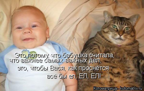 Котоматрица: Это потому, что бабушка считала,  что важнее самых важных дел, это, чтобы Вася, как проснётся всё бы ел, ЕЛ, ЕЛ!