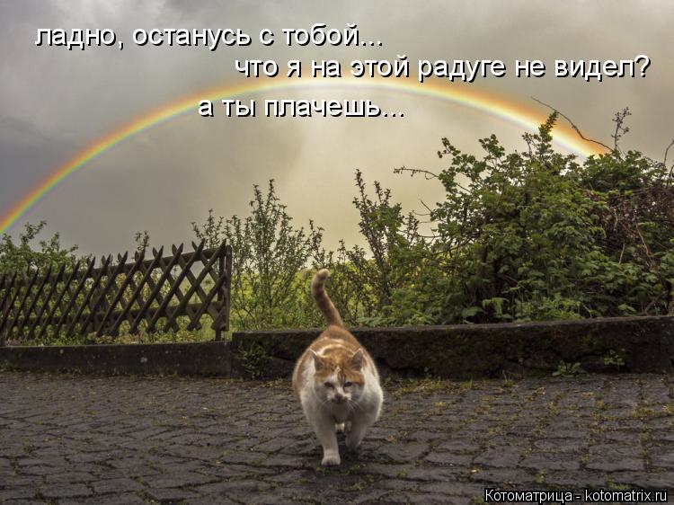 Котоматрица: ладно, останусь с тобой... что я на этой радуге не видел? а ты плачешь...