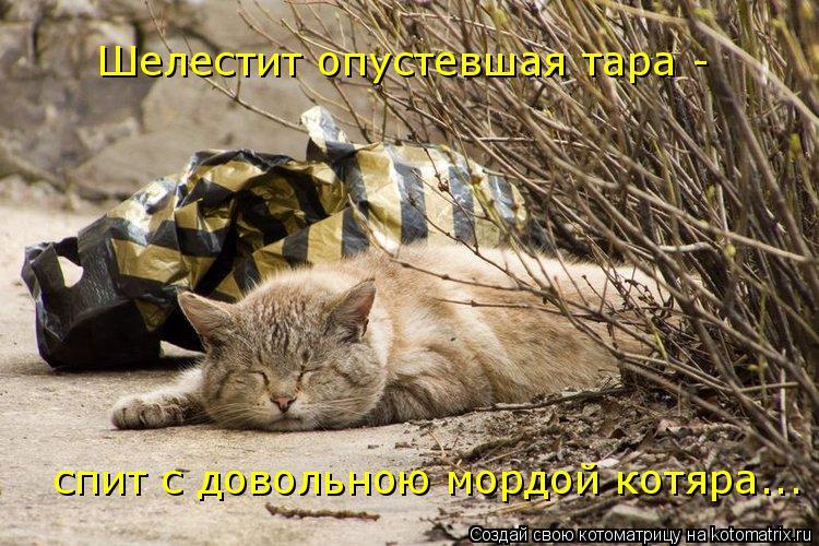 Котоматрица: Шелестит опустевшая тара -   спит с довольною мордой котяра...