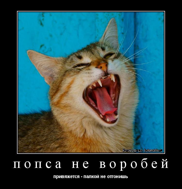 Котоматрица: попса не воробей привяжется - палкой не отгонишь