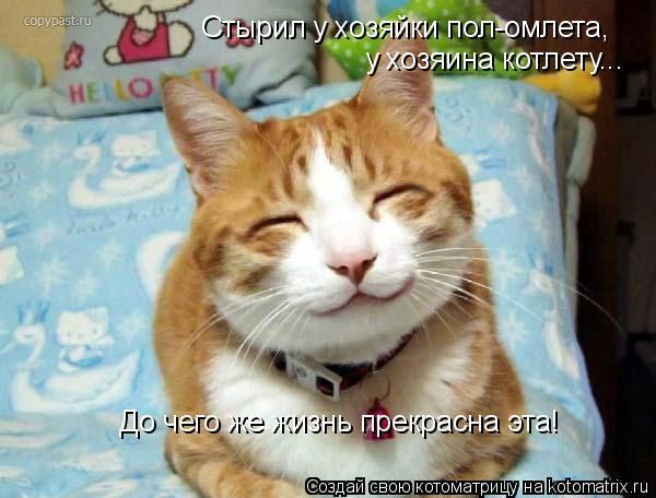 Котоматрица: Стырил у хозяйки пол-омлета,  у хозяина котлету... До чего же жизнь прекрасна эта!