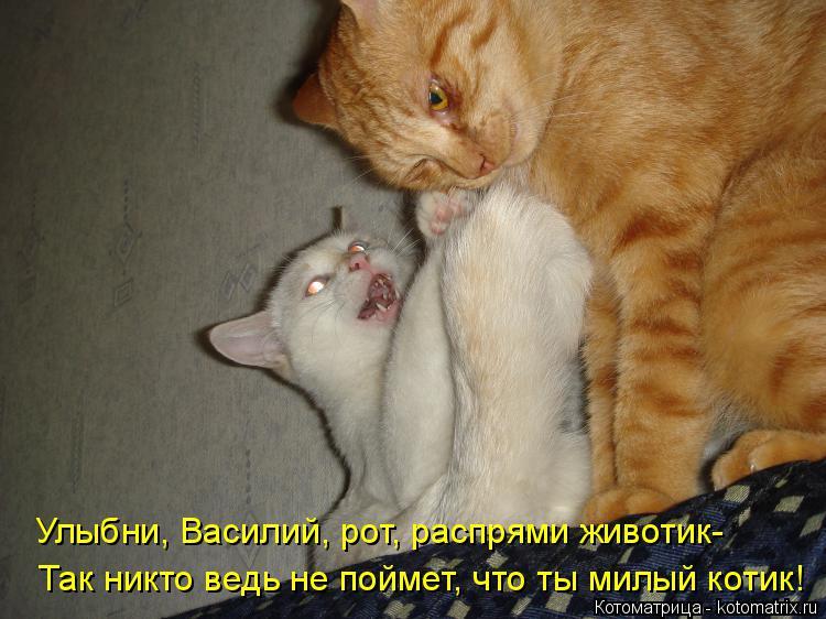 Котоматрица: Улыбни, Василий, рот, распрями животик- Так никто ведь не поймет, что ты милый котик!