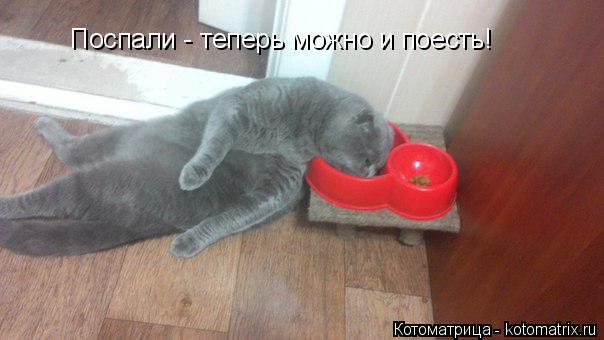Котоматрица: Поспали - теперь можно и поесть!