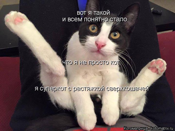 Котоматрица: вот я такой и всем понятно стало что я не просто кот я суперкот с растяжкой сверхкошачей