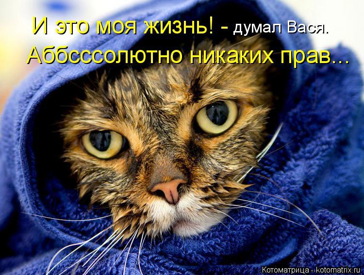 Котоматрица: Аббсссолютно никаких прав... И это моя жизнь! -  думал Вася.