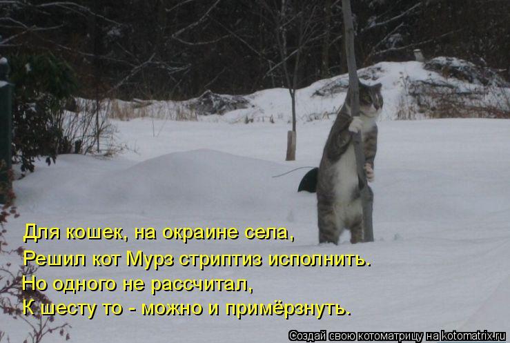 Котоматрица: Для кошек, на окраине села, Решил кот Мурз стриптиз исполнить. Но одного не рассчитал, К шесту то - можно и примёрзнуть.