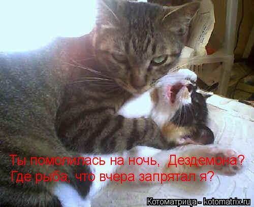 Котоматрица: Ты помолилась на ночь,  Дездемона?  Где рыба, что вчера запрятал я?