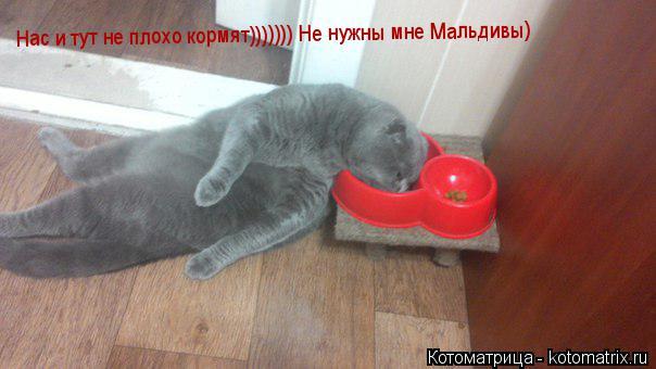 Котоматрица: Нас и тут не плохо кормят))))))) Не нужны мне Мальдивы)