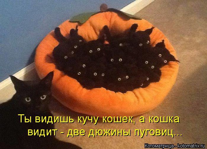 Котоматрица: Ты видишь кучу кошек, а кошка видит - две дюжины пуговиц...