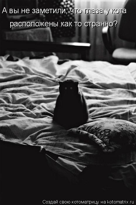 Котоматрица: А вы не заметили, что глаза у кота расположены как то странно?