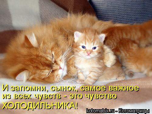 Котоматрица: И запомни, сынок, самое важное  из всех чувств - это чувство ХОЛОДИЛЬНИКА!