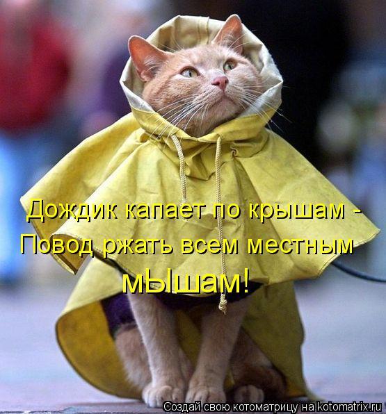 Котоматрица: Дождик капает по крышам -  Повод ржать всем местным  мЫшам!