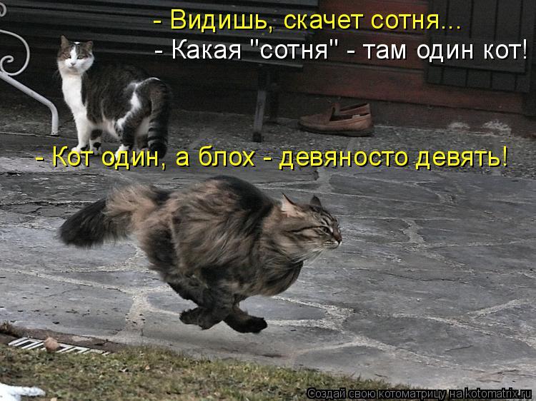 """Котоматрица: - Видишь, скачет сотня... - Какая """"сотня"""" - там один кот! - Кот один, а блох - девяносто девять!"""