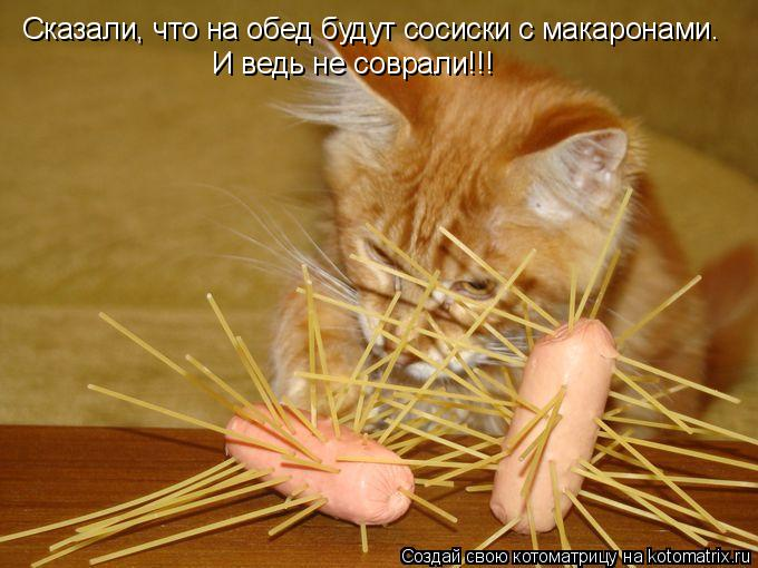 Котоматрица: Сказали, что на обед будут сосиски с макаронами. И ведь не соврали!!!