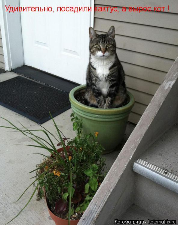 Котоматрица: Удивительно, посадили кактус, а вырос кот !