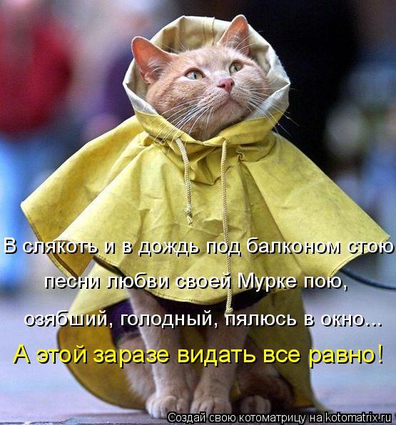 Котоматрица: В слякоть и в дождь под балконом стою, песни любви своей Мурке пою, озябший, голодный, пялюсь в окно... А этой заразе видать все равно!