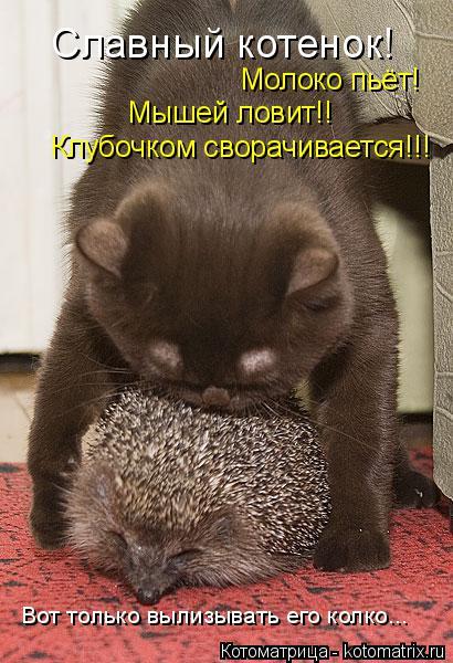 Котоматрица: Славный котенок! Молоко пьёт! Мышей ловит!! Клубочком сворачивается!!! Вот только вылизывать его колко...