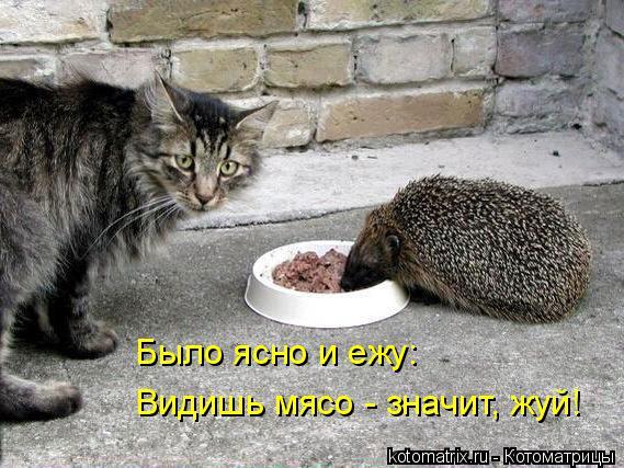 Котоматрица: Было ясно и ежу: Видишь мясо - значит, жуй!
