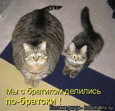 Котоматрица: Мы с братиком делились по-братски !