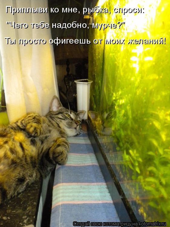 """Котоматрица: Приплыви ко мне, рыбка, спроси: """"Чего тебе надобно, мурче?"""" Ты просто офигеешь от моих желаний!"""