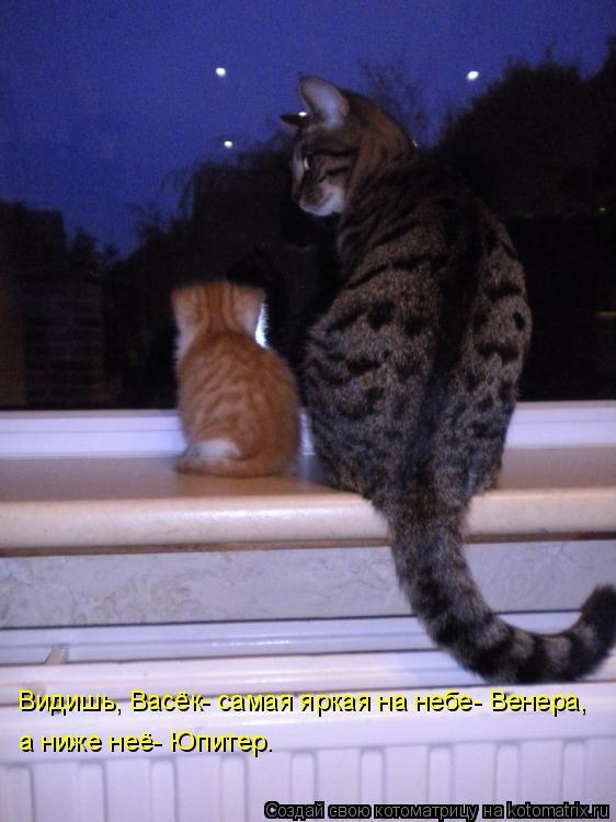 Котоматрица: Видишь, Васёк- самая яркая на небе- Венера,  а ниже неё- Юпитер.
