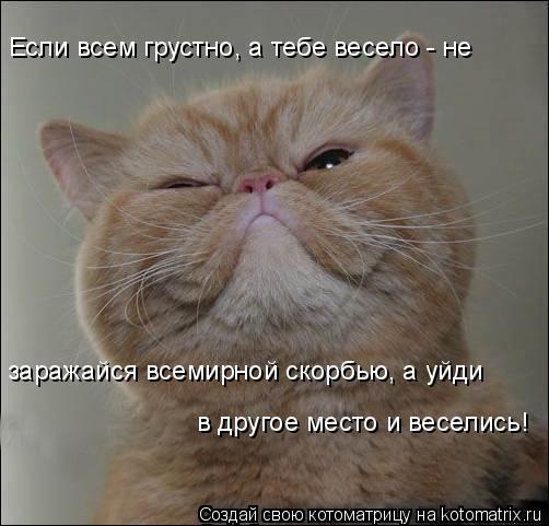 Котоматрица: Если всем грустно, а тебе весело - не  заражайся всемирной скорбью, а уйди  в другое место и веселись!
