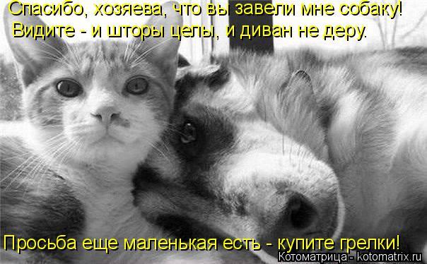 Котоматрица: Спасибо, хозяева, что вы завели мне собаку! Видите - и шторы целы, и диван не деру. Просьба еще маленькая есть - купите грелки!