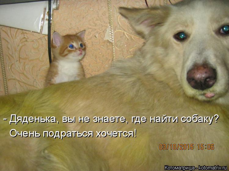 Котоматрица: - Дяденька, вы не знаете, где найти собаку? Очень подраться хочется!
