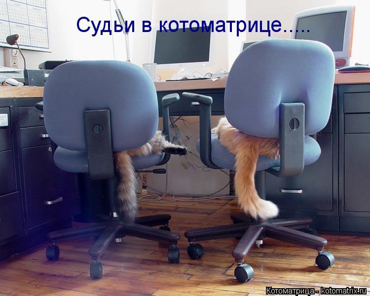 Котоматрица: Судьи в котоматрице.....