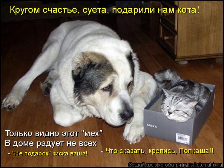 """Котоматрица: Кругом счастье, суета, подарили нам кота! Только видно этот """"мех"""" В доме радует не всех - """"Не подарок"""" киска ваша!  - Что сказать, крепись, Полкаш"""