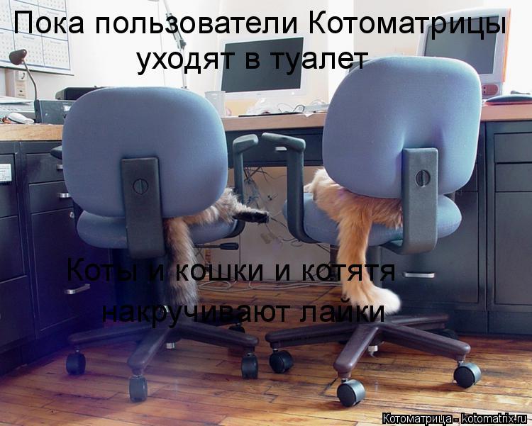 Котоматрица: Пока пользователи Котоматрицы уходят в туалет  Коты и кошки и котятя  накручивают лайки