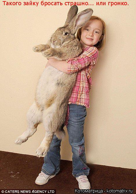 Котоматрица: Такого зайку бросать страшно... или громко.