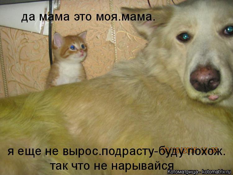 Котоматрица: да мама это моя.мама. я еще не вырос.подрасту-буду похож. так что не нарывайся