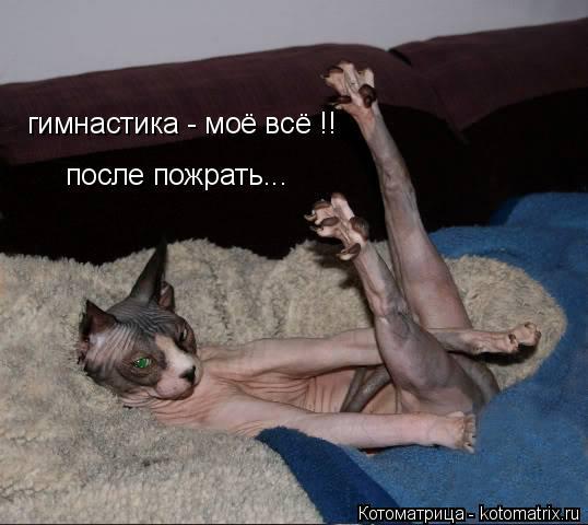 Котоматрица: гимнастика - моё всё !! после пожрать...