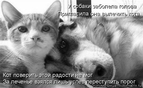 Котоматрица: За леченье взялся лишь успев переступить порог Кот поверить этой радости не мог У собаки заболела голова Пригласила она вылечить кота