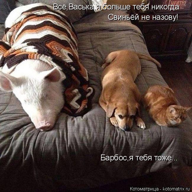 Котоматрица: Всё,Васька,я больше тебя никогда Свиньёй не назову! Барбос,я тебя тоже...