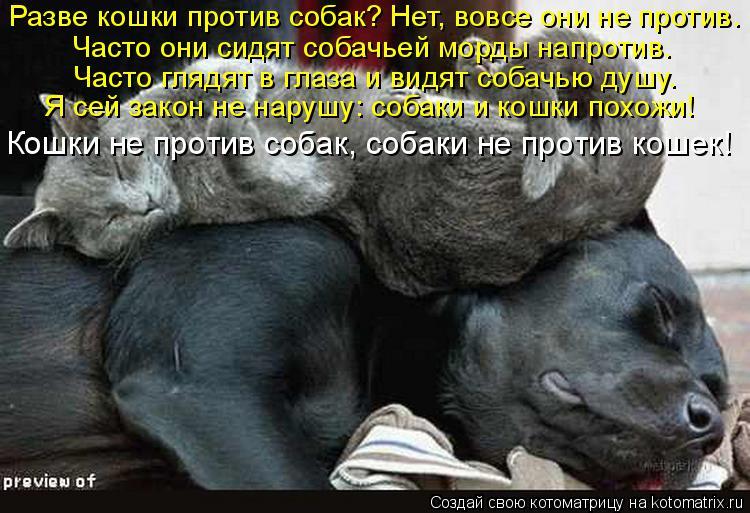 http://kotomatrix.ru/images/lolz/2015/11/14/s0.jpg