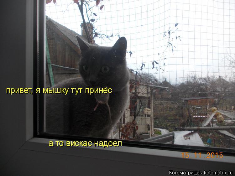 Котоматрица: привет, я мышку тут принёс а то вискас надоел