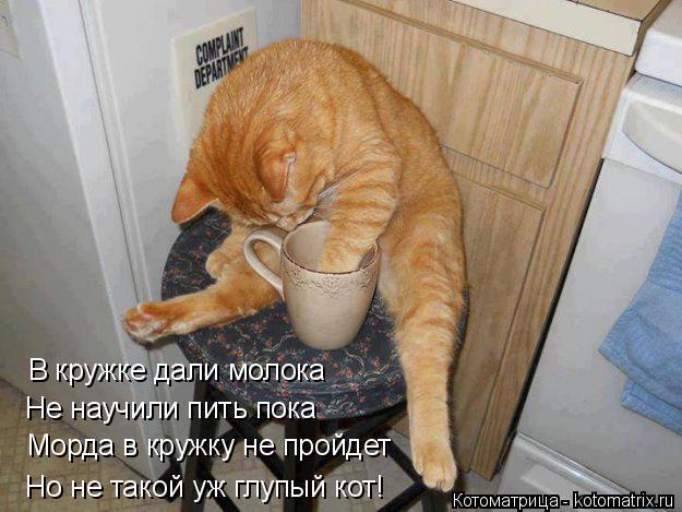 Котоматрица: В кружке дали молока  Не научили пить пока Морда в кружку не пройдет Но не такой уж глупый кот!