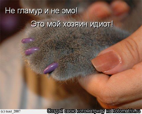 Котоматрица: Не гламур и не эмо! Это мой хозяин идиот!